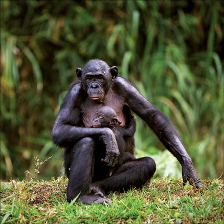 Mutual masturbation primate understand
